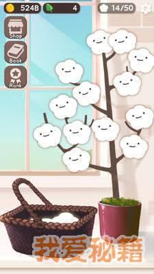 棉花树图1