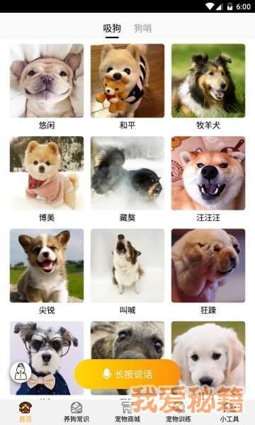 跑狗翻譯圖1