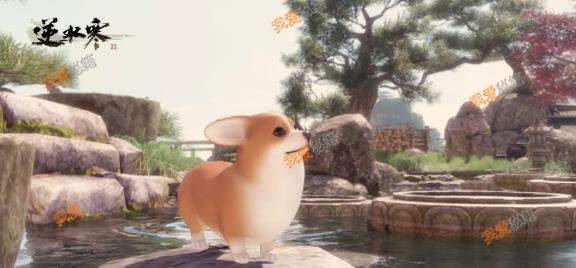 逆水寒柯基背景介紹-逆水寒首個全系寵物