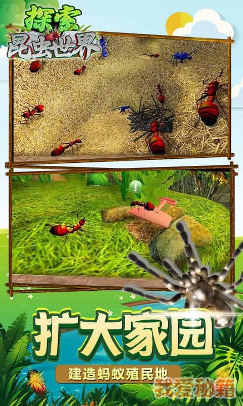 探索昆虫世界图2