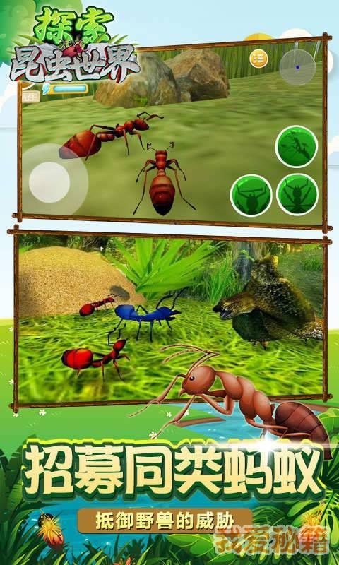 探索昆虫世界图3