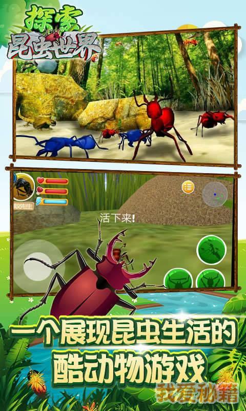 探索昆虫世界图4