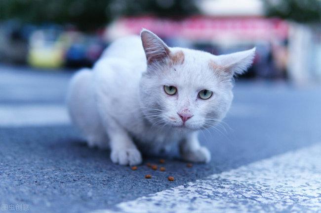 遇见你的猫破解版游戏大全